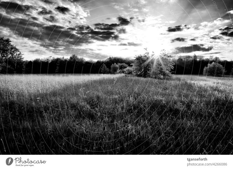 The sun sets over a bush in a meadow Meadow Light Dark side Shadow Exterior shot Back-light Sunlight Sunbeam Deserted Contrast Tree Day Landscape