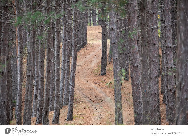 Winding Curvy Road in the Forest landscape winding road forest coniferous outdoor tree nature green curve natural view mountain beautiful transport curvy
