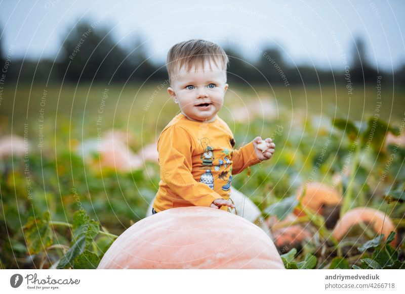 Little boy having fun on a tour of a pumpkin farm at autumn. Child near giant pumpkin. Pumpkin is traditional vegetable used on American holidays - Halloween and Thanksgiving Day.