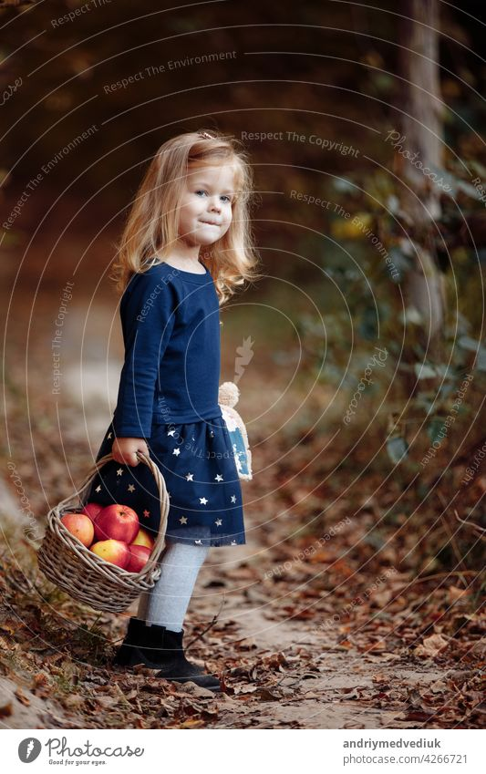 beautiful young girl in the park with apples. Beautiful girl harvests apples. The child holds apples and a basket with apples in his hands. A walk in the garden.