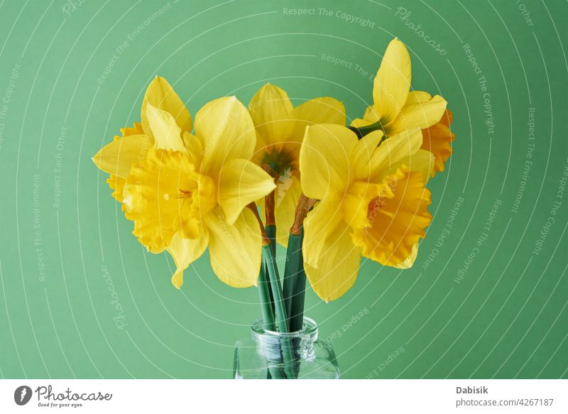 Narcissus flowers in vase on green background narcissus daffodil bouquet yellow copy space spring summer blossom nature beautiful easter creative minimal