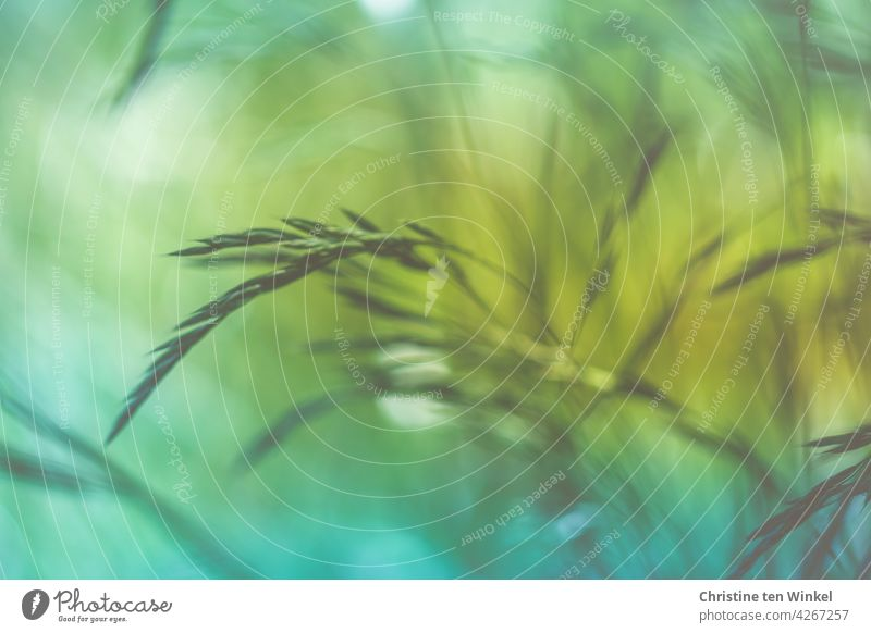 Grasses in the wind grasses Movement Wind Nature Meadow Plant Green Abstract Background picture Spring Summer blurriness Yellow Blue pretty motion blur