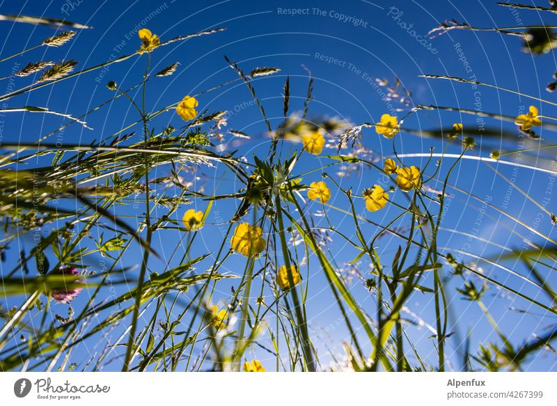 Allergy nightmare Meadow Meadow flower Flower Blossom Summer Flower meadow Spring Exterior shot Colour photo Nature Deserted Blossoming Plant Garden Green Grass