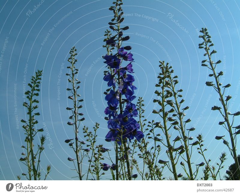 Under a blue sky Violet Plant Flower Nature Sky Blue