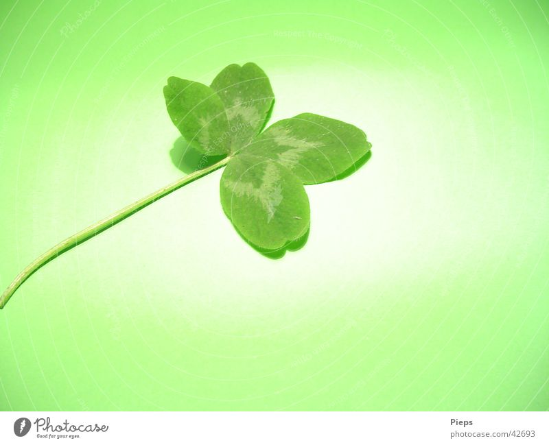 You're lucky Colour photo Interior shot Close-up Copy Space bottom Neutral Background Artificial light Happy Plant Meadow Sign Green Desire Cloverleaf