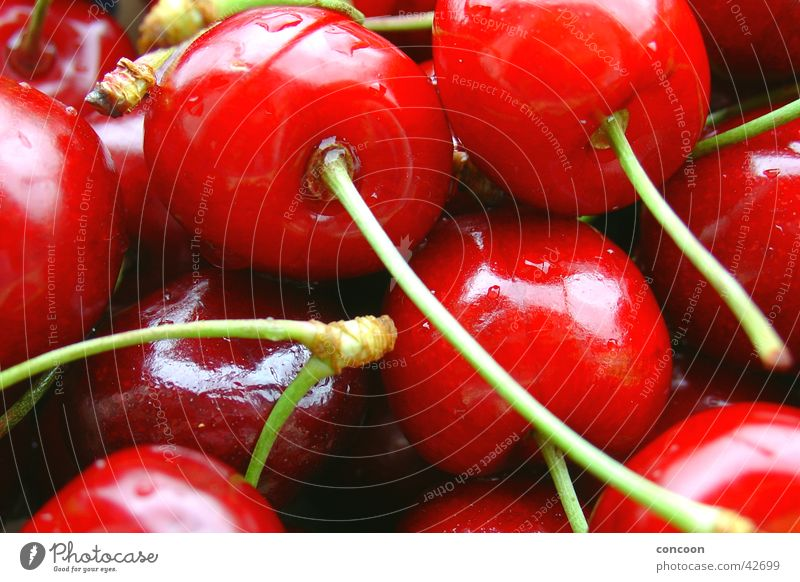 Red & crisp I Cherry Summer Drops of water Delicious Fresh Sweet Glittering Juicy Fruit