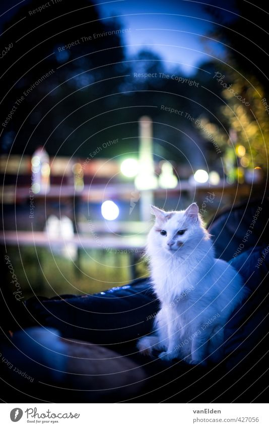 The Queen acknowledges a new day Garden Sofa Hair Animal Pet Cat 1 Think Looking Sit Cool (slang) White Self-confident Calm Independence Colour photo