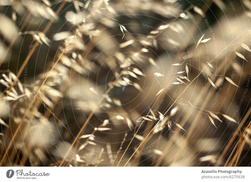 Beautiful calming dry grass background with seamless natural pattern atmosphere autumn beautiful bright brown calmness closeup countryside design field flora