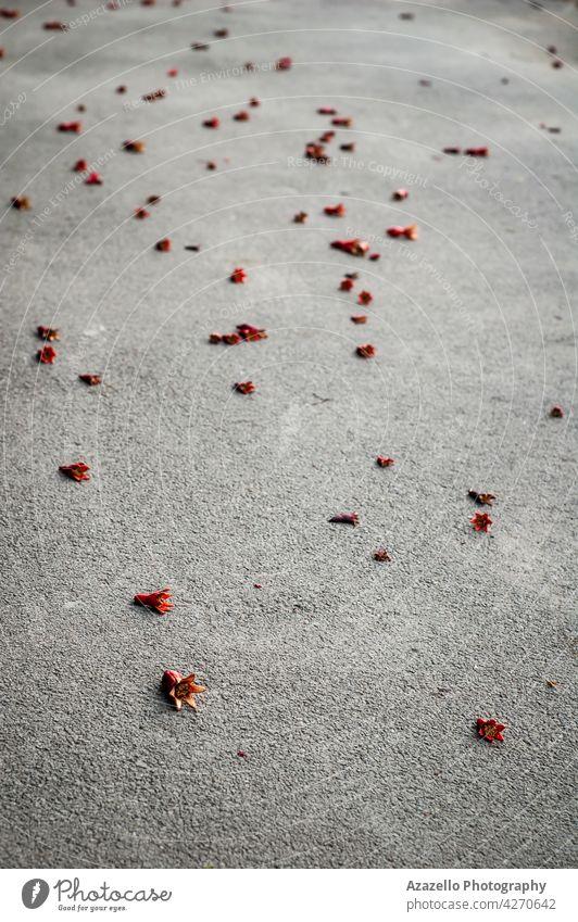 Fallen unripe pomegranates on an asphalt road grey fall fallen fruit no business industry harmful waste matter crisis small ecology ecological dirt air