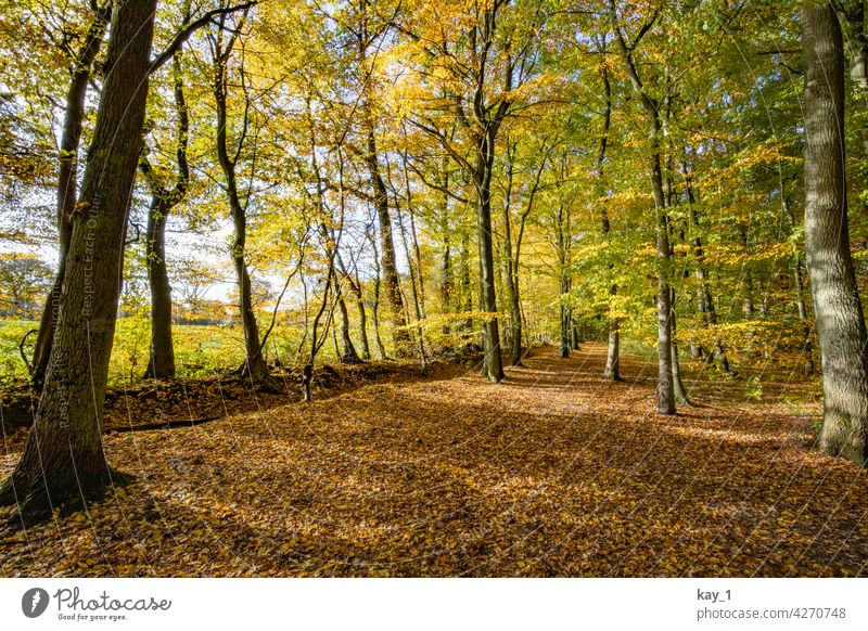 Deciduous forest in autumn Autumn Autumnal Autumn leaves Autumnal colours Early fall Automn wood autumn mood trees Forest Clearing Edge of the forest Field