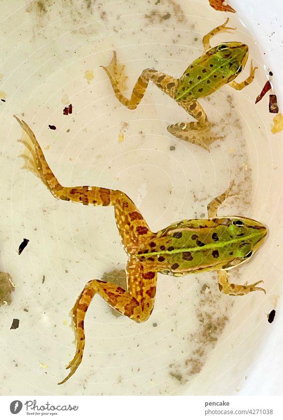 1700 | abstrampeln Frosch Eimer fangen Garten grün Teich gefangen zwei Amphibien jung Nahaufnahme wachsen Anstrengung Mühe Arbeit Wasser Leben