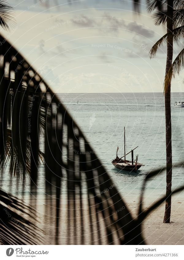 Traditional sailing boat in the Maldives in front of a beach with palm trees Sailboat Beach wooden boat palms Ocean Water Vacation & Travel coast Sand Island