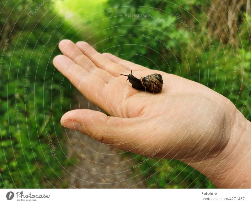 Snail saved! Fotoline is happy and put the little one in the grass. Crumpet Snail shell Slowly Feeler Animal Slimy Mucus House (Residential Structure) Close-up
