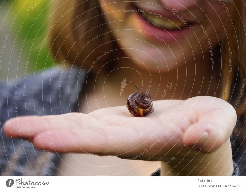 Ha, not only mom can save snails, Fotoline's daughter rejoices. Crumpet Snail shell Slowly Feeler Animal Slimy Mucus House (Residential Structure) Close-up