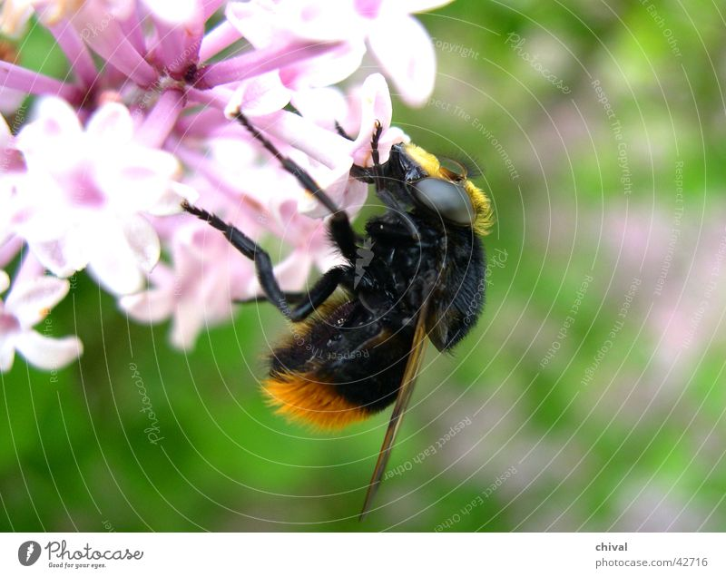 Flower Eyes Nutrition Blossom Food Wing Bee Bumble bee