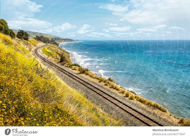 Pacific railroad along the coast of California with blooming wildflowers in springtime california railway pacific big sur travel ocean train landscape beach