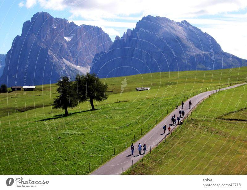 Sassolungo Hiking Langkofel Dolomites South Tyrol Alpine pasture Meadow Seiser Alm Mountain Alps Trip Plattkofel Rock