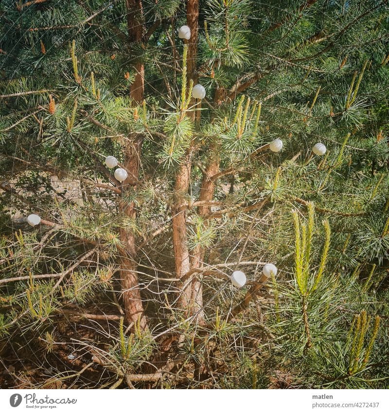egg tree Jawbone Forest eggshells hung Green Coniferous forest Tree Nature Branch Spring Wonder