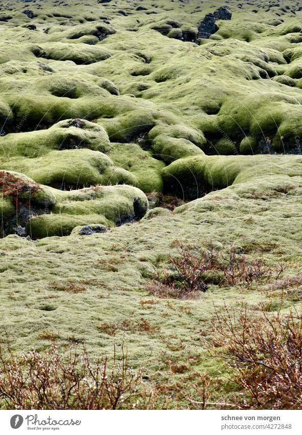 green healthy happy moss Moss Iceland Nature Green Ground Exterior shot Vacation & Travel Tourism Landscape Adventure Far-off places landscape Colour photo Lawn