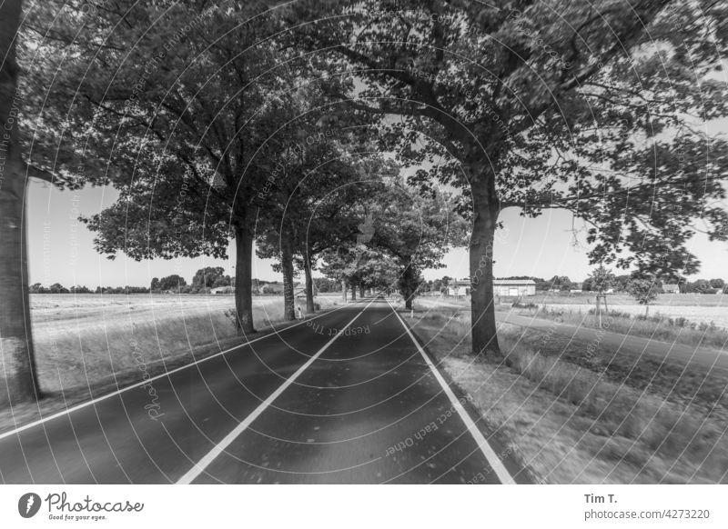 an avenue in Brandenburg Avenue Tree Lanes & trails Street Nature Landscape Exterior shot Deserted Environment Central perspective Copy Space bottom