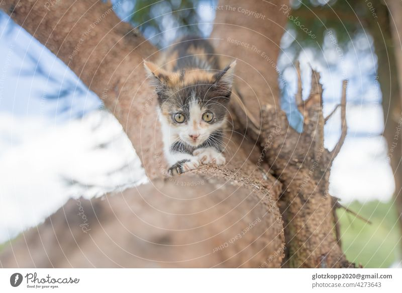 Young cat claws at a branch Cat Pet youthful Baby animal Animal Colour photo 1 Deserted Animal portrait Day Exterior shot Looking Looking into the camera pretty