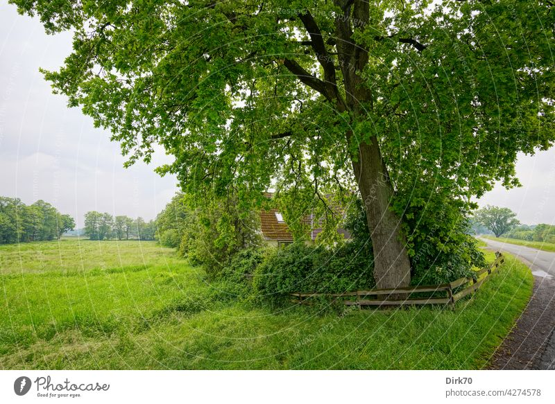 Living in the green - a house surrounded by meadows under a really big tree House (Residential Structure) Tree trunk in the country live in the country Green
