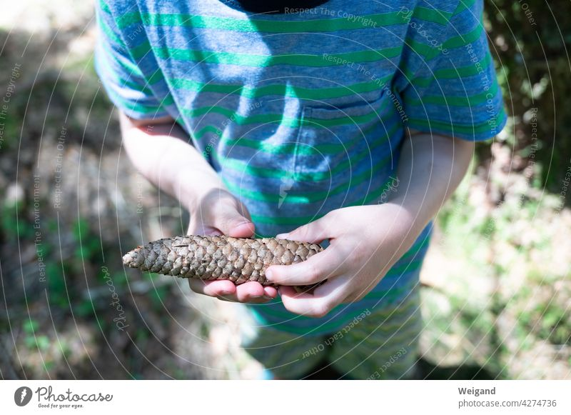 Child with pine cone in hand Forest To go for a walk Family Toddler Kindergarten Fir cone Cone search Autumn Summer Nature experiential education pedagogy
