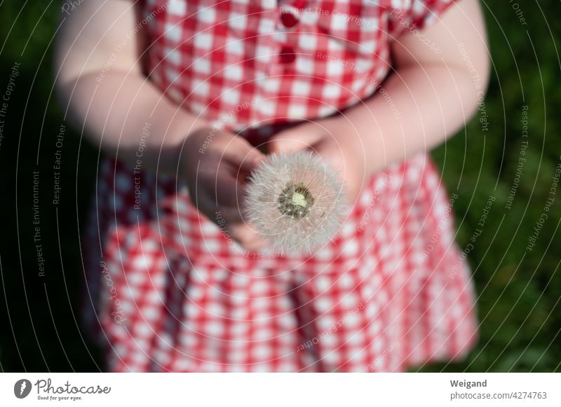 Child with dandelion as a gift in hand Mother's Day Thank you. I'll take care of it. Grateful Toddler Summer Pustule Gift Nature Red Spring Birthday Baptism