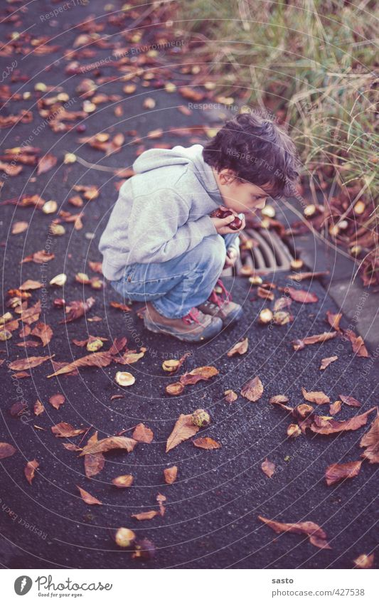 take a close look Masculine Child Boy (child) Infancy Life 1 Human being 3 - 8 years Environment Nature Autumn Collector's item Crouch Looking Curiosity