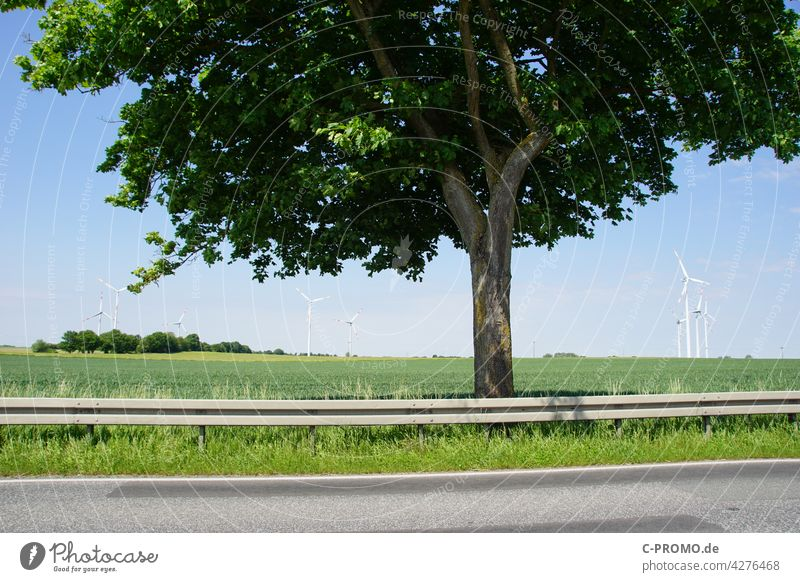 Tree on federal road in front of field with wind turbines Street Crash barrier Wind energy plant Field Landscape Pavement Pinwheel