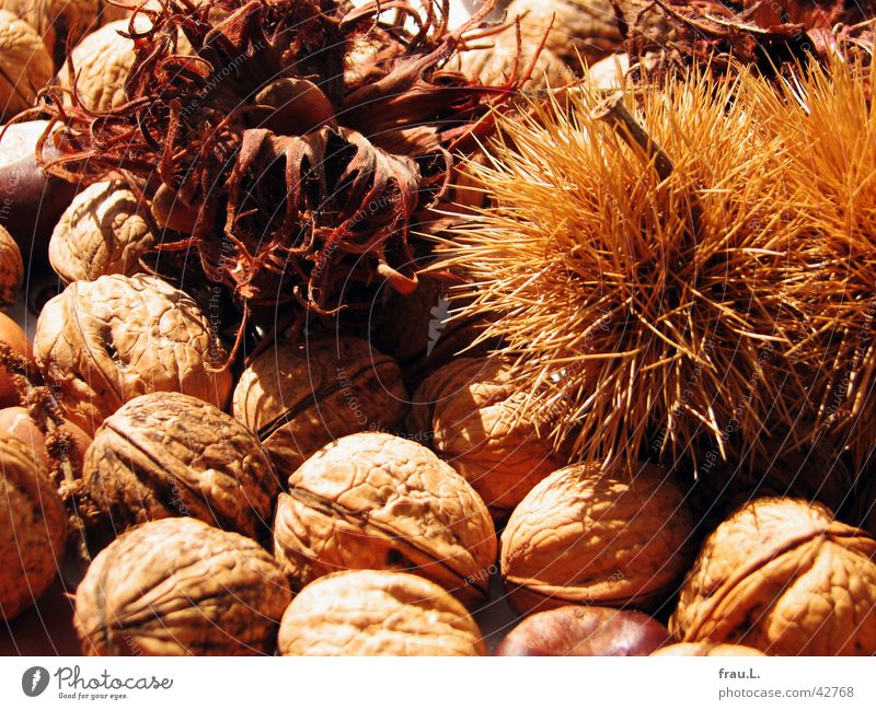 autumn Walnut Hazelnut Healthy Brown Autumn Nut Nutrition Fruit Vegetarian diet Chestnut tree Dried Sun Thorn