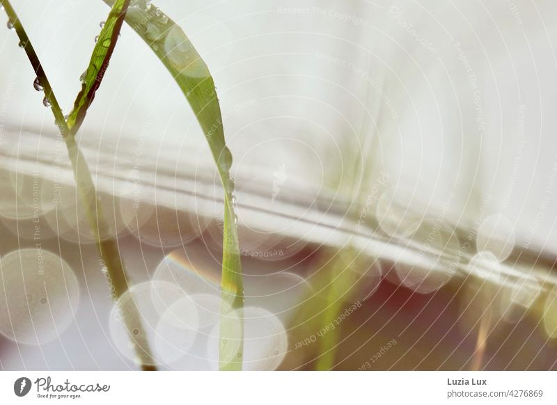 Blade of grass, guardrail and light after the rain Grass blade of grass blades of grass Rain Drop Light Sun Reverberation Reflection reflection raindrops Green