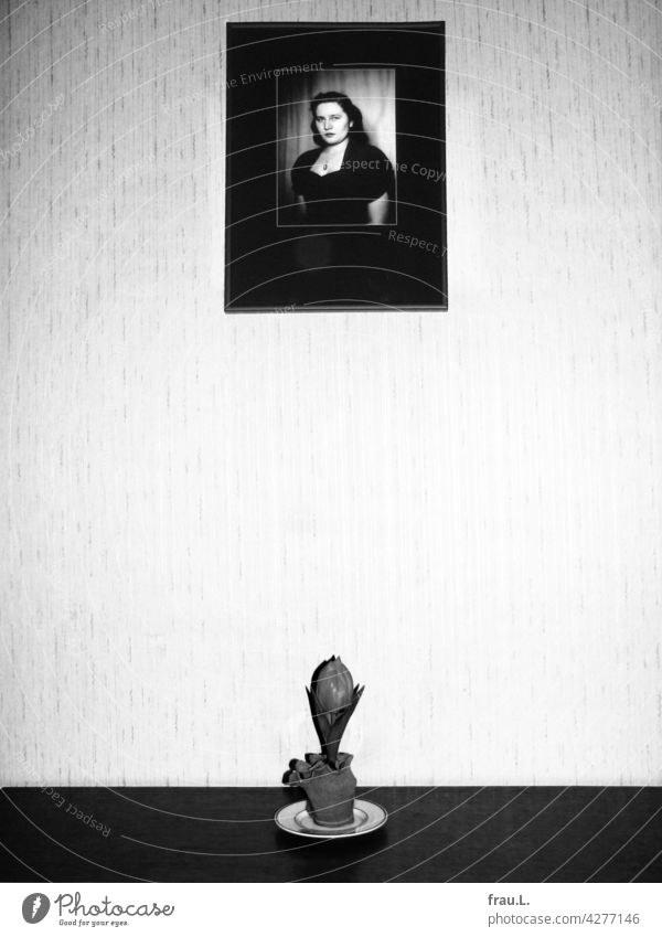 sad tulip photo Image Woman youthful Memory 1950s Wife Grief Wall (building) Flower Flowerpot Attractive pretty