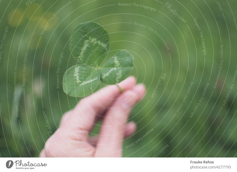 Hand of a woman holding a three-leaf clover Cloverleaf White Clover leaves Trifoliate Triangle Symmetry Green Bright green Woman handle Meadow Plant