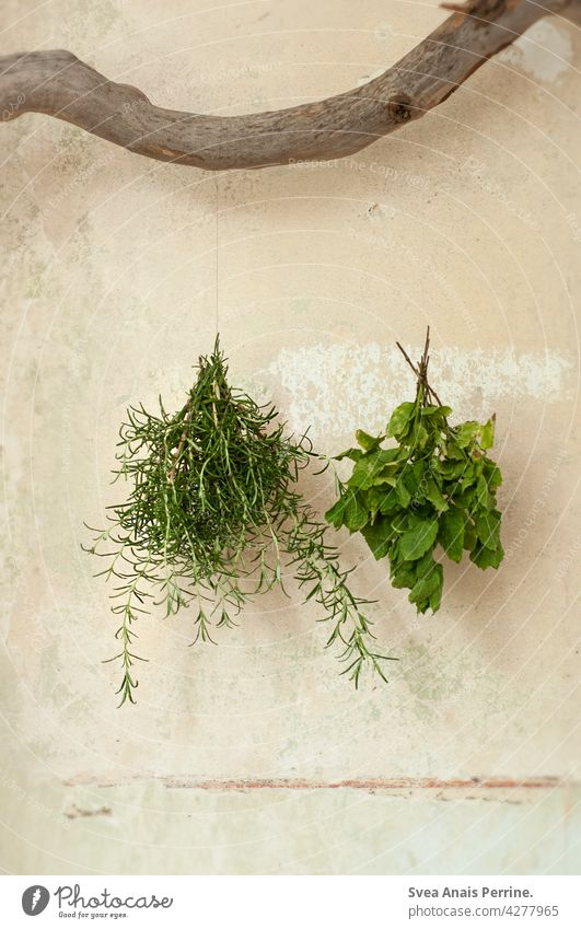 herbs Herbs and spices Rosemary Mint peppermint Branch Kitchen kitchen herbs Hang up Dry Unplastered Healthy Healthy Eating healthy lifestyle naturally