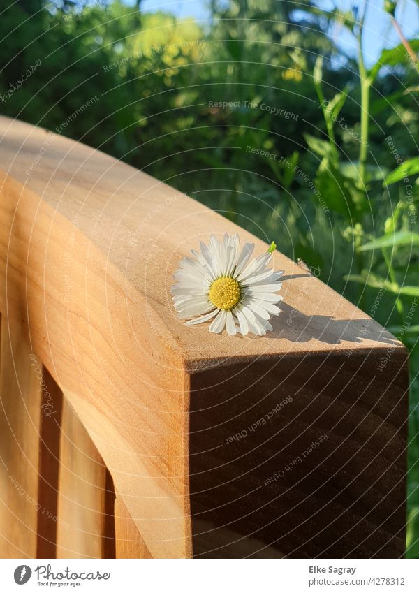 Daisies on a bench partial view Daisy Bench Grass Garden Summer Nature Colour photo Close-up Blossom Plant