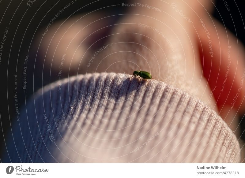 Green beetle on sleeve Beetle Insect Macro (Extreme close-up) Nature Close-up Crawl Colour photo Small Exterior shot Shallow depth of field Hand Day sleeve edge