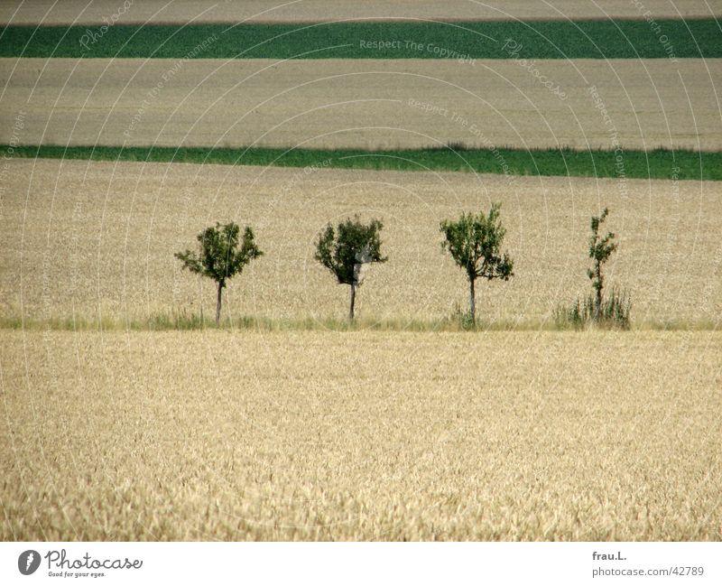 Beautiful Tree Lanes & trails Field Footpath Grain Cornfield Wheat Hannover Apple tree Lower Saxony Wheatfield Degersen