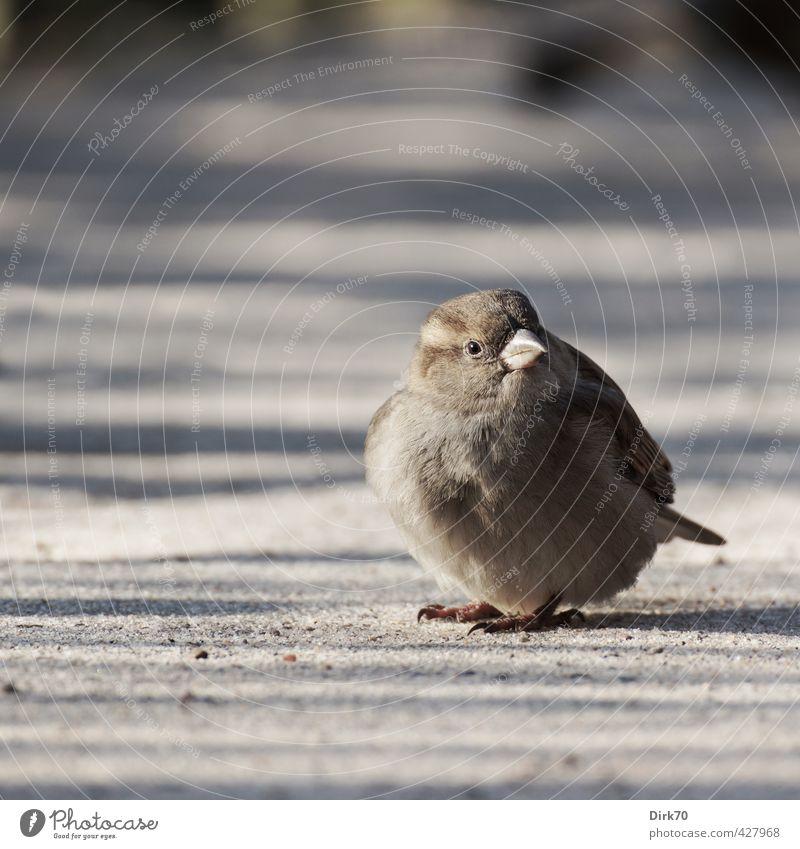 Badminton 'something different Animal Beautiful weather Park Lanes & trails Wild animal Bird Sparrow Passerine bird female Feminine 1 Sand Observe Freeze Sit