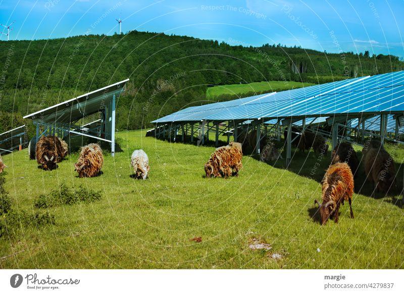 Sheep grazing under a solar plant Sun Industry Environment Plant Renewable panel Panels Force Electricity Generator sunny Farm animal Technology Sky wildlife