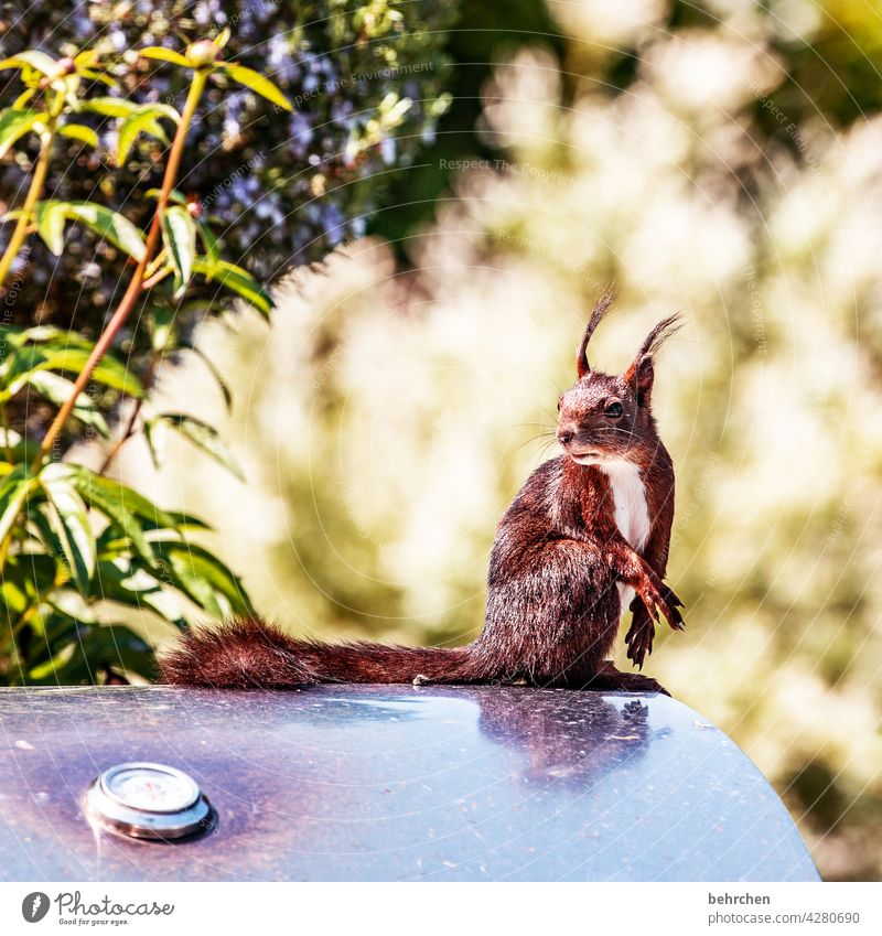 nonchalantly cheeky monkey Rodent Nature Pelt Wild animal Funny Small Brash Barbecue (apparatus) Garden Squirrel Observe Curiosity Exterior shot Deserted Cute