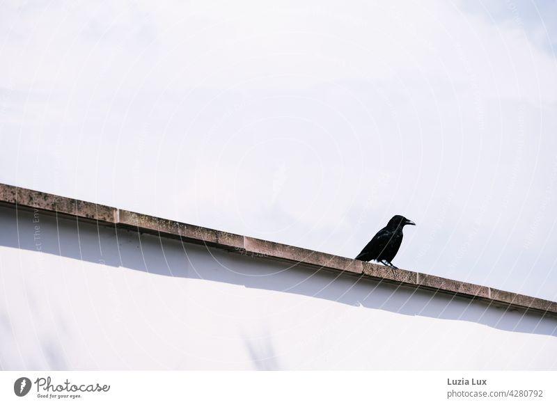 On the wall...  black crow Crow raven Bird Black Raven birds Exterior shot Sky Wild Town Wall (barrier) Line Direct Light Blue Clouds Spring Glittering