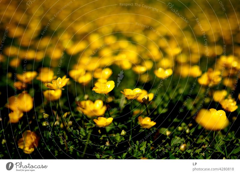 background of yellow flowers Field Feminine Warmth Firm Hope Freedom Contrast Low-key Mysterious Dream Emotions calmness tranquil Calm Senses Contentment