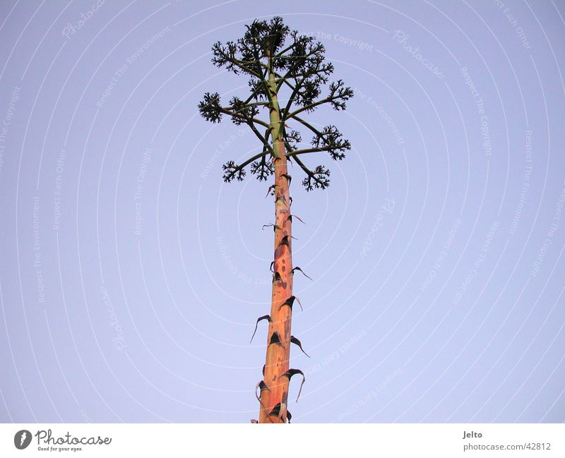 Nature Sky Tree Plant Summer Palm tree Portugal