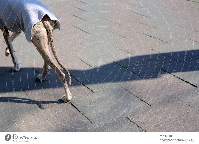 dog rounds Dog Pet Walk the dog Greyhound Elegant Purebred dog Companion Tails To go for a walk Concrete slab Coat dog coat Winter Autumn Love of animals