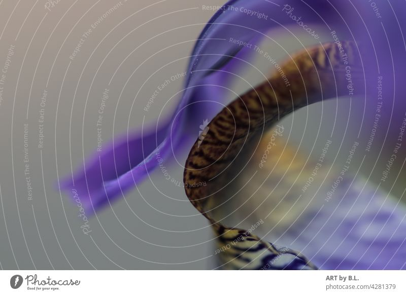with some momentum lily vibration Curved detail Flower vivacious Blossom lily pad blurred