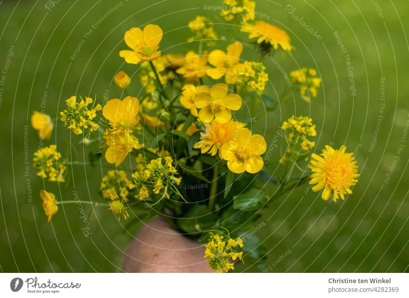 Yellow wildflower bouquet with dandelion, buttercup and rape against green background wild flowers Wildflower Bouquet Green Hand stop pretty Blossoming