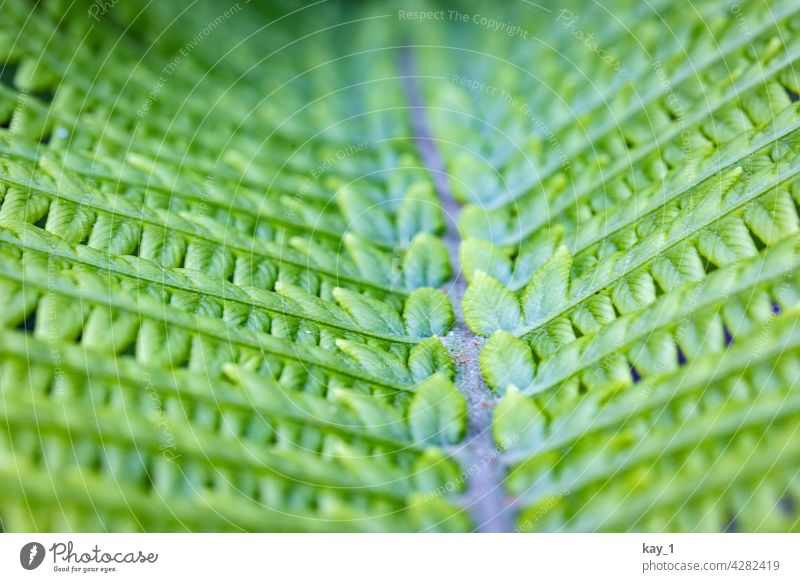 Fern leaf close up Nature Green Foliage plant Garden Garden plants garden plant Plant Colour photo Exterior shot Environment Shallow depth of field Detail Day