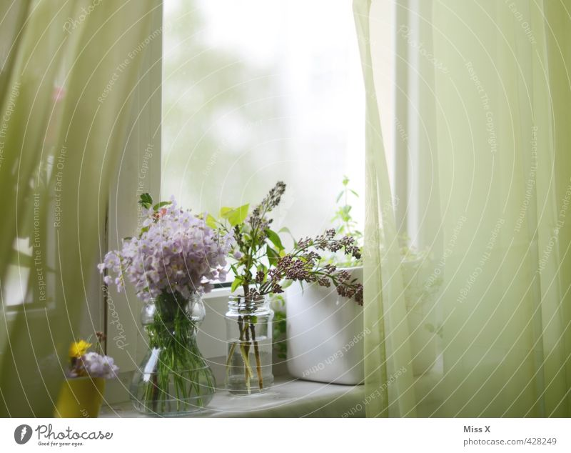 The famous curtain Decoration Spring Summer Flower Blossom Window Blossoming Fragrance Faded Growth Moody Spring fever Romance Bouquet Vase Display of affection