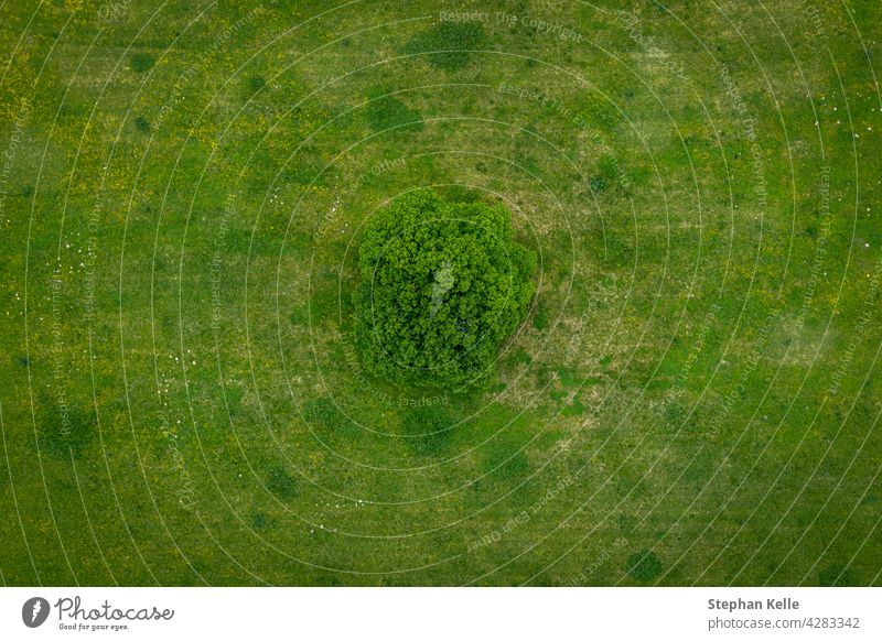 A lonely green tree captured from above - a treetop shot as a peaceful background, concept nature. view landscape aerial plant natural park environment outdoor